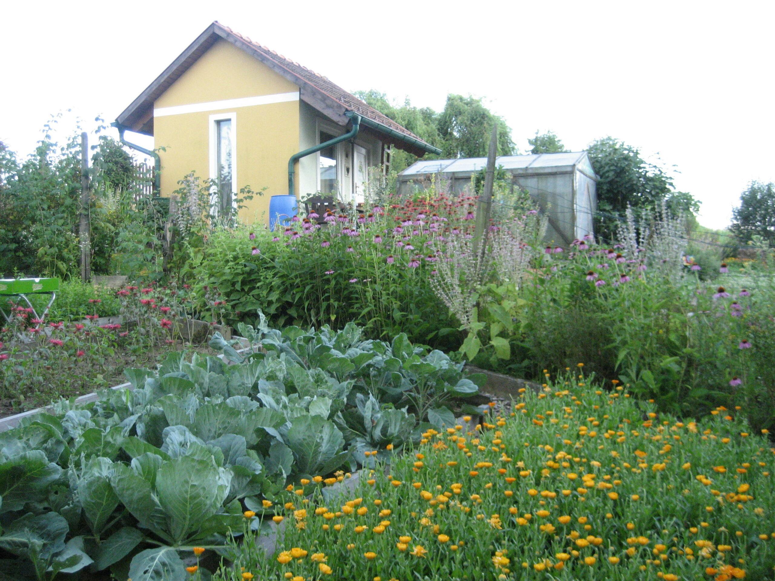 Bild Kräutergarten